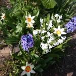 Jardinage demain Samedi 10 mars